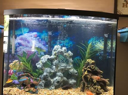 125 gallons freshwater fish tank (mostly fish and non-living decorations) - My 38 gallon bowfront
