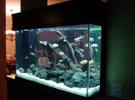 Rated #10: 155 Gallons Freshwater Fish Tank - Here's another view of all my fish.