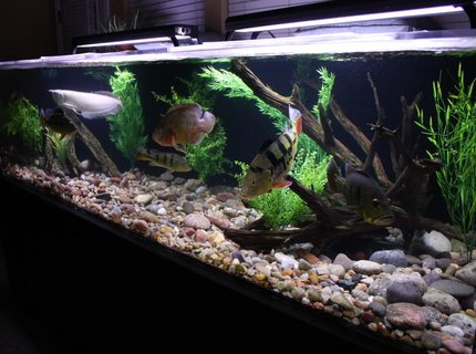 350 gallons freshwater fish tank (mostly fish and non-living decorations) - 350 gallon South American