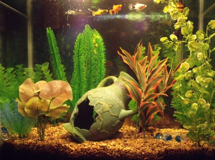 14 gallons freshwater fish tank (mostly fish and non-living decorations) - My tank is a 14g tall with 5 adult Platies, 1 adult Molly, and 2 Platy fry and 1 Molly fry. 