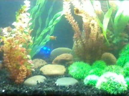 60 gallons freshwater fish tank (mostly fish and non-living decorations) - the tank