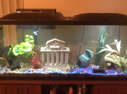 50 gallons freshwater fish tank (mostly fish and non-living decorations) - 50 gallon freshwater