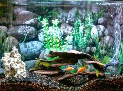50 gallons freshwater fish tank (mostly fish and non-living decorations)