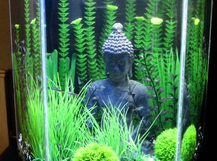 20 gallons freshwater fish tank (mostly fish and non-living decorations) - Black, Green, Grassy, Buddha, Love