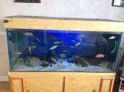 450 gallons freshwater fish tank (mostly fish and non-living decorations) - Mixed cichlid haps and Mbuna