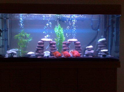 80 gallons freshwater fish tank (mostly fish and non-living decorations) - Freshwater Tank