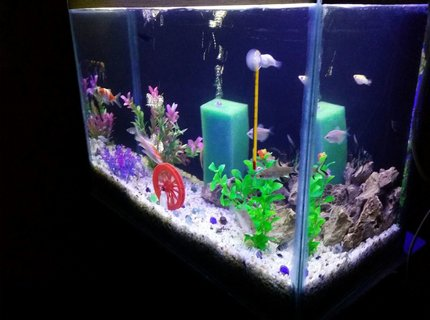 20 gallons freshwater fish tank (mostly fish and non-living decorations) - Freshwater Tank