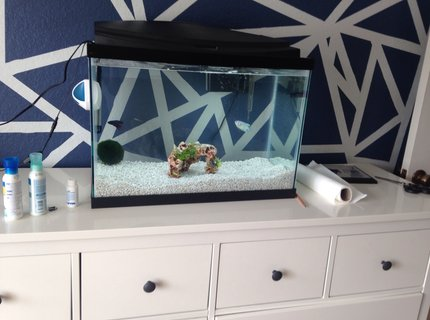 20 gallons freshwater fish tank (mostly fish and non-living decorations) - .