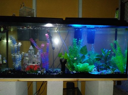55 gallons freshwater fish tank (mostly fish and non-living decorations) - Half white light half blue