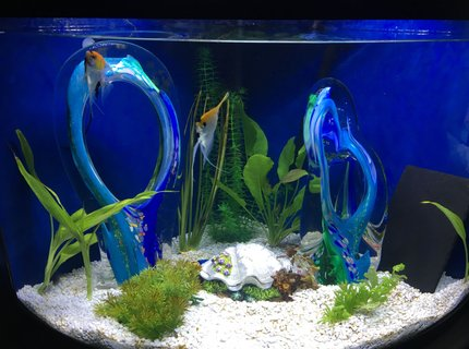 36 gallons freshwater fish tank (mostly fish and non-living decorations) - Blue Glass Lagoon