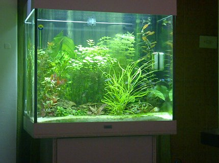 42 gallons freshwater fish tank (mostly fish and non-living decorations) - Juwel Lido 200 Neon tetras and Rummy nose tetras