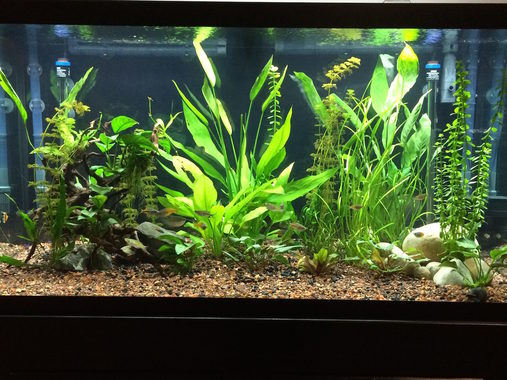 Cleaning Tips For Aquarium Filters