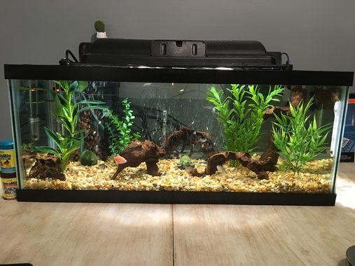 Tips for cleaning and maintaining your tank filter for How do you clean a fish tank