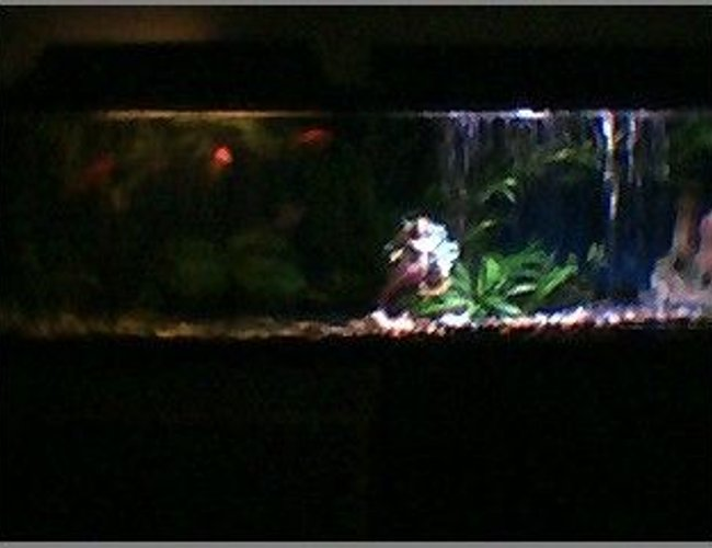 45 gallons freshwater fish tank (mostly fish and non-living decorations) - night and day