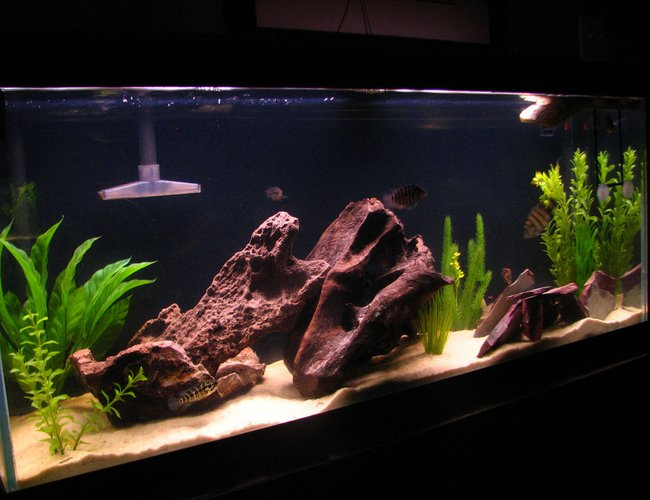 60 gallons freshwater fish tank (mostly fish and non-living decorations) - The Tank......