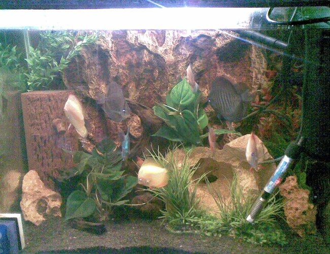 60 gallons freshwater fish tank (mostly fish and non-living decorations) - Its a Discus Tank 2.5 FT x 2 FT