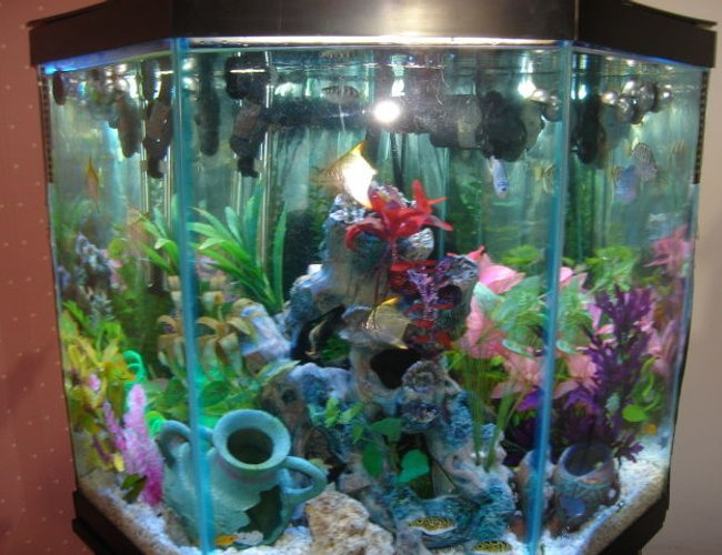 46 gallons freshwater fish tank (mostly fish and non-living decorations) - Brackish Water Fish Aquarium