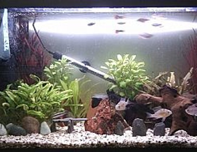25 gallons freshwater fish tank (mostly fish and non-living decorations) - My Tank