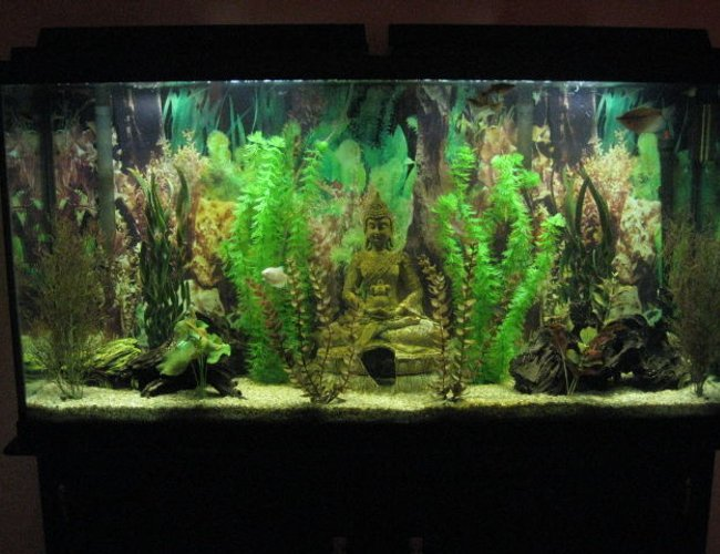 60 gallons freshwater fish tank (mostly fish and non-living decorations) - 60 gallon freshwater fish tank