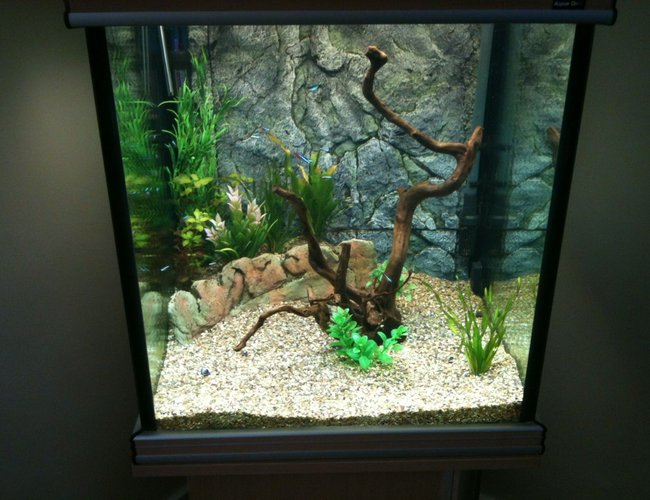 43 gallons freshwater fish tank (mostly fish and non-living decorations) - 2nd attempt