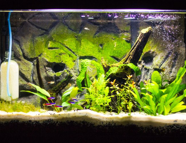 20 gallons freshwater fish tank (mostly fish and non-living decorations) - Update of my tank.