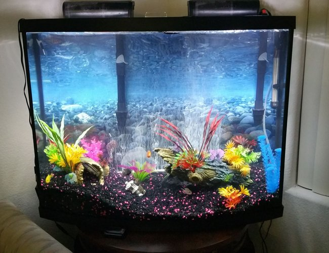 38 gallons freshwater fish tank (mostly fish and non-living decorations) - 38 gal freshwater african cichilds