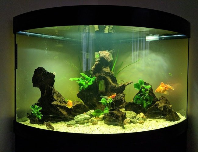 190 gallons freshwater fish tank (mostly fish and non-living decorations) - My 190litre aquarium