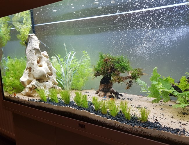 55 gallons freshwater fish tank (mostly fish and non-living decorations) - Working progress