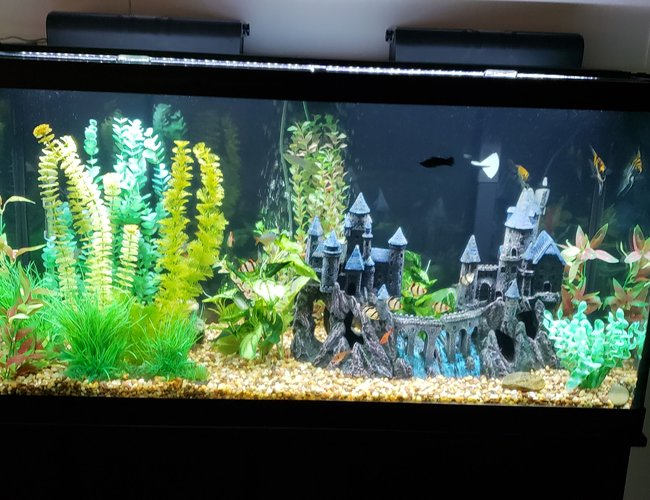 90 gallons freshwater fish tank (mostly fish and non-living decorations) - The Camelot