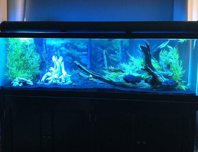 125 gallons freshwater fish tank (mostly fish and non-living decorations) - 125 gallon