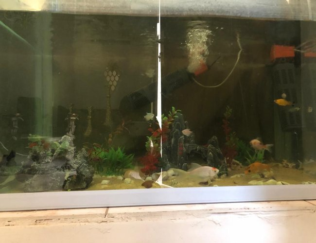 130 gallons freshwater fish tank (mostly fish and non-living decorations) - My 130 gallon fish tank(it has blanket from behind thats why its dark)