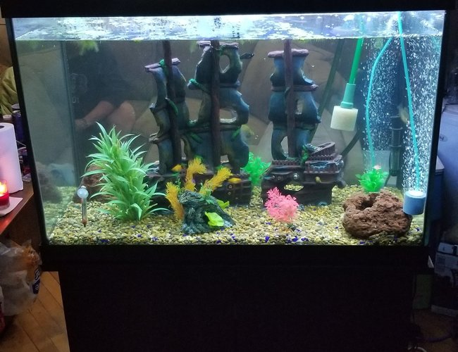 65 gallons freshwater fish tank (mostly fish and non-living decorations) - My new set up