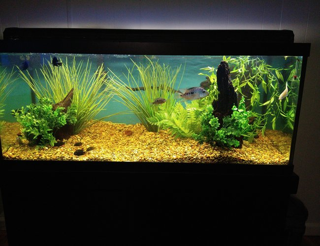 75 gallons freshwater fish tank (mostly fish and non-living decorations) - None