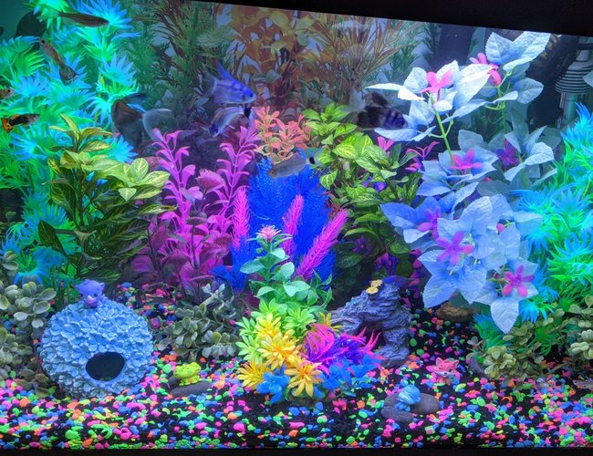 20 gallons freshwater fish tank (mostly fish and non-living decorations) - Glowfish lights on a guppy tank