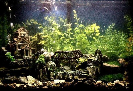 Rated #30: 29 Gallons Freshwater Fish Tank - Old House & Bridge Theme