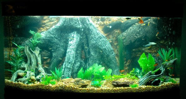 Rated #40: 85 Gallons Freshwater Fish Tank - 85gal bowfront community tank