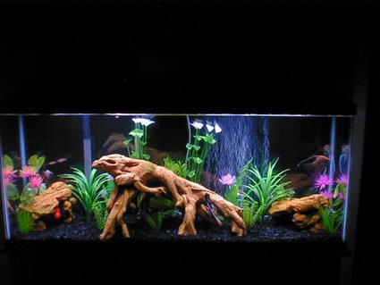 Rated #32: 55 Gallons Freshwater Fish Tank - 55 gallon