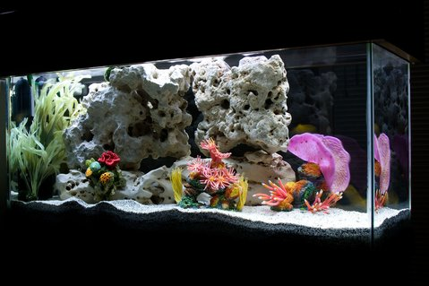 "Rated #31: 30 Gallons Freshwater Fish Tank - My ""saltwater-themed"" African Cichlid tank."