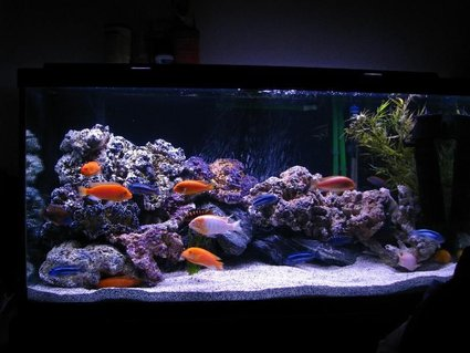 Rated #95: 90 Gallons Freshwater Fish Tank - Latest setup, added more rocks, stronger powerhead