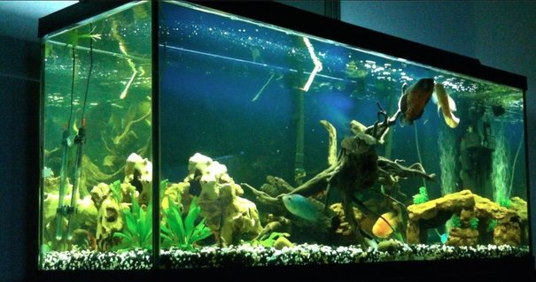 Rated #65: 120 Gallons Freshwater Fish Tank - 120 Gallon Freshwater Setup currently stocked with: