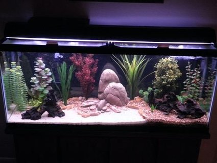 Rated #68: 55 Gallons Freshwater Fish Tank - 55 gallon freshwater community tank