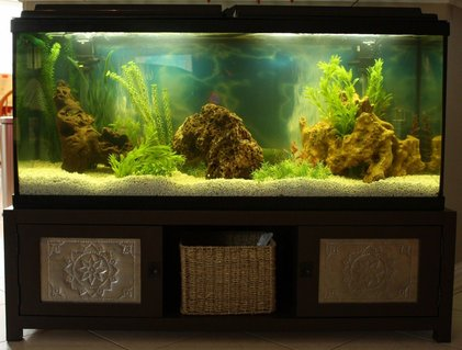 Rated #59: 50 Gallons Freshwater Fish Tank - 50 gal Loach Den