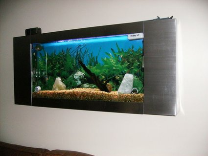 Rated #63: 15 Gallons Freshwater Fish Tank - My wall tank