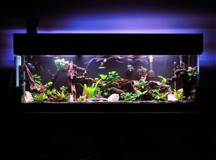 Rated #3: 125 Gallons Freshwater Fish Tank - I have gotten lost in this magical place MANY a night.