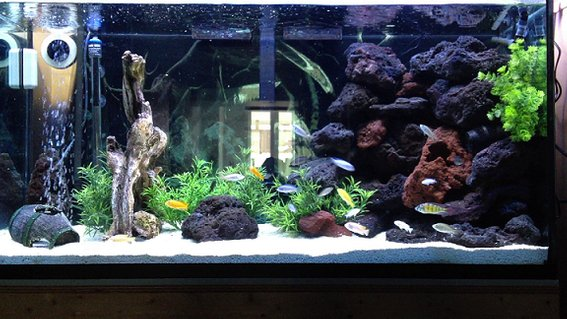 Rated #91: 90 Gallons Freshwater Fish Tank - 90 gal. African Cichlid Tank