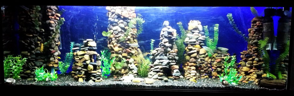 Rated #19: 150 Gallons Freshwater Fish Tank - Changed from Community Tropicals to African Cichlids after moving house