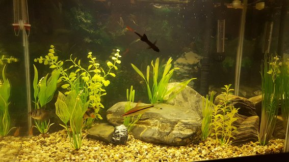 Rated #35: 18 Gallons Freshwater Fish Tank - My current tank