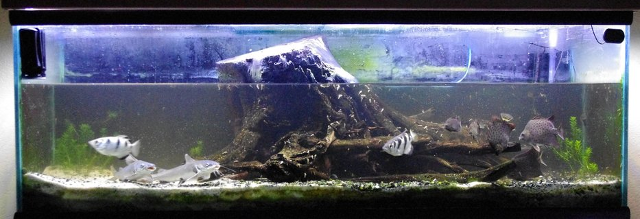 Rated #59: 100 Gallons Freshwater Fish Tank - brackish 100 gallon almost full