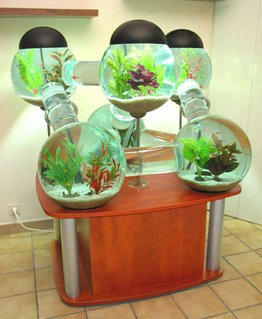 Rated #3: 60 Gallons Freshwater Fish Tank - My super cool tank!!