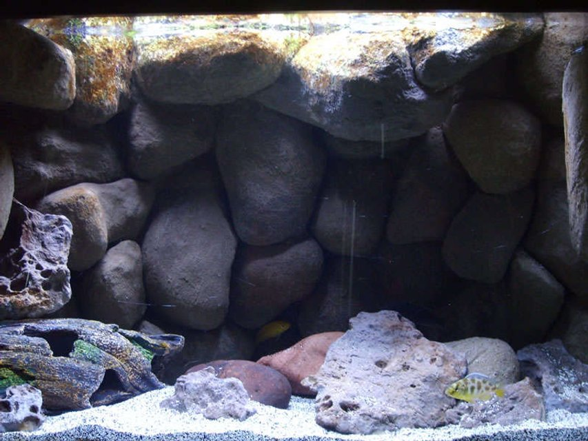 Rated #33: 20 Gallons Freshwater Fish Tank - Lake Malawi Mbuna Tank